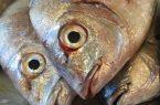لزوم افزایش نظارتهای بهداشتی در بازار ماهي و ميگو كنگان